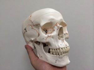 顎関節の症状、歯の痛み、原因になるものはなにがあるのか?