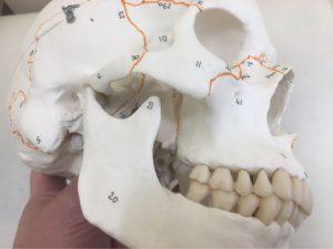 顎関節症が歯医者「だけ」では治らない理由。